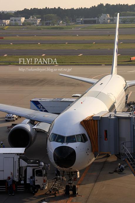 ANA FLY! PANDA